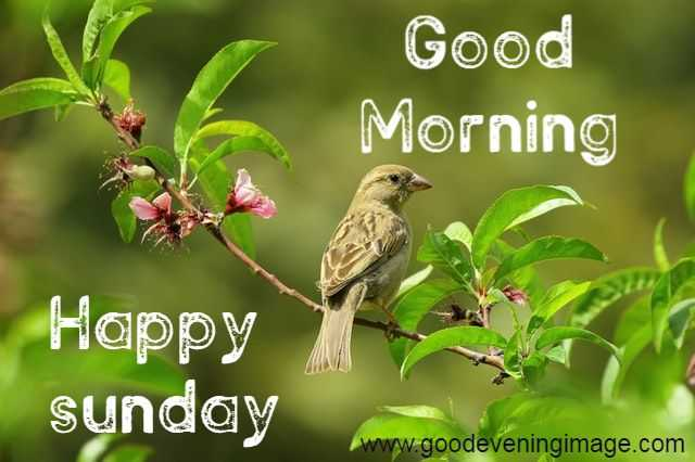 Good Morning Happy Sunday Hd Images, Photos, Pictures