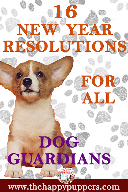 16 new year resolution for dog guardians