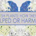 British Plants: How They've Helped for Harmed #infographic