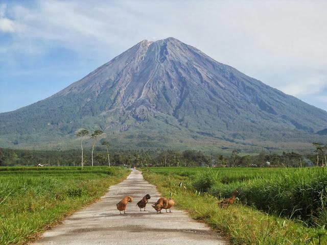 Keindahan Nusantara di Gunung Semeru Jawa Timur