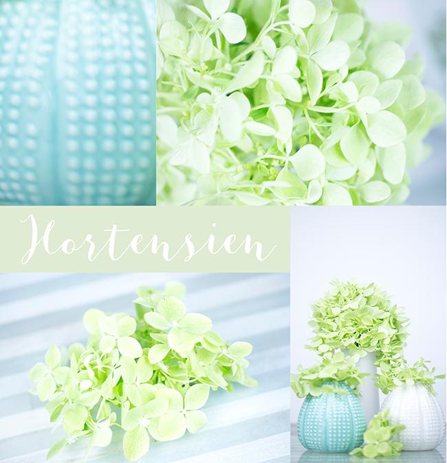 Hortensien | zartgrün