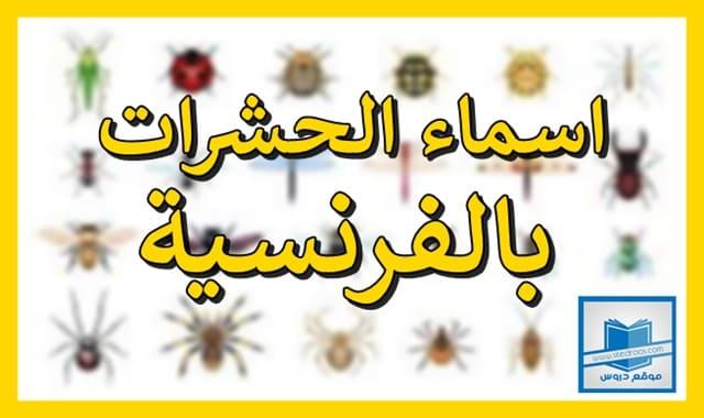 اسماء الحشرات بالفرنسية