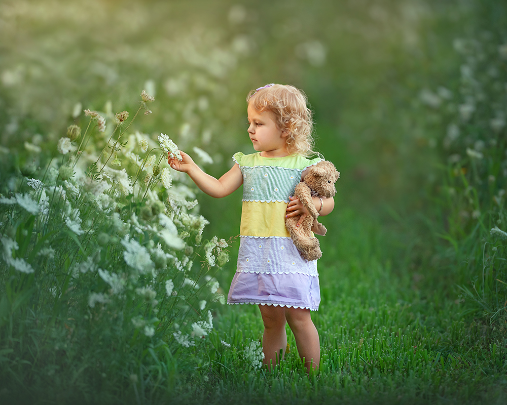 little girl in flower field with teddy bear and golden light in DeKalb IL