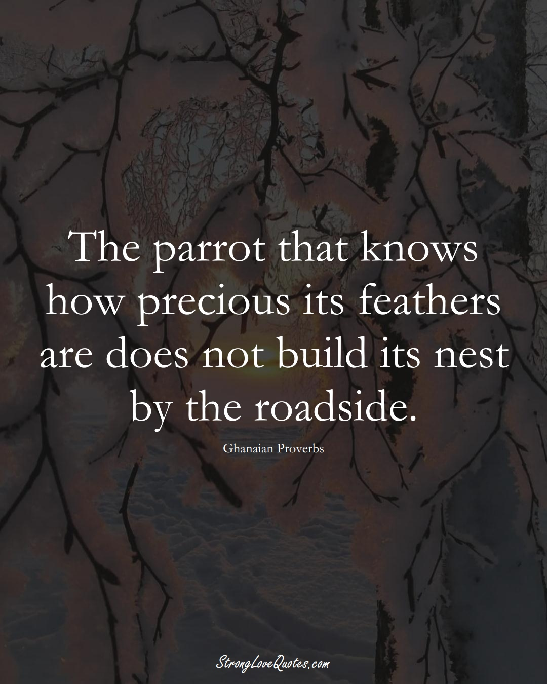 The parrot that knows how precious its feathers are does not build its nest by the roadside. (Ghanaian Sayings);  #AfricanSayings