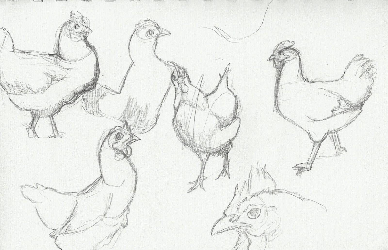 Картинки куры как рисовать