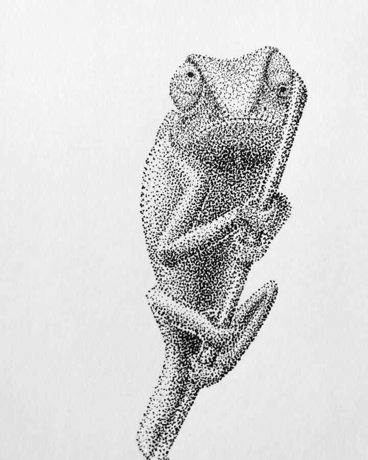 08-Chameleon-Maria-Lecanda-www-designstack-co