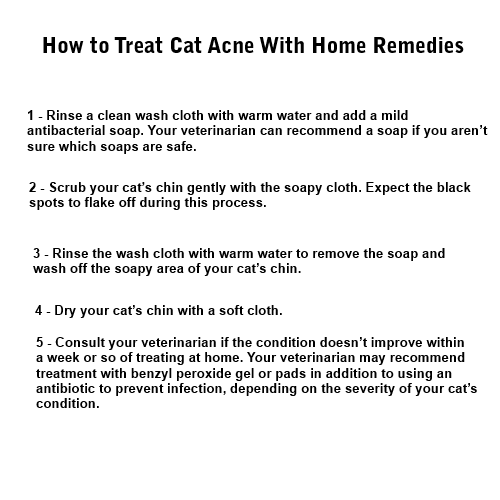 Acne Cat How To Treat It Magic Solution