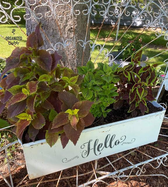 Photo of a metal rectangular planter with coleus