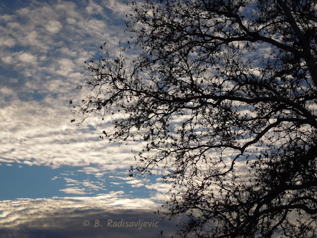 """""""Larry"""" Moore Park in Paso Robles: A Photographic Review - """"Buttermilk"""" Clouds"""