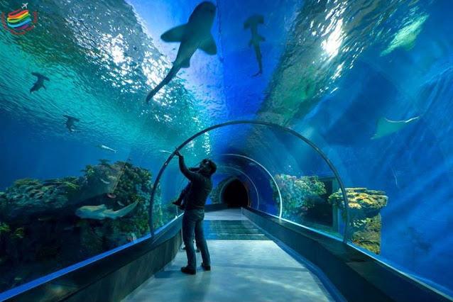 Grand Aquarium - Hurghada