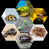 बिच्छू कीड़े मकोड़े और ततैया कीट पतंगे काट लेने के बाद क्या करें?