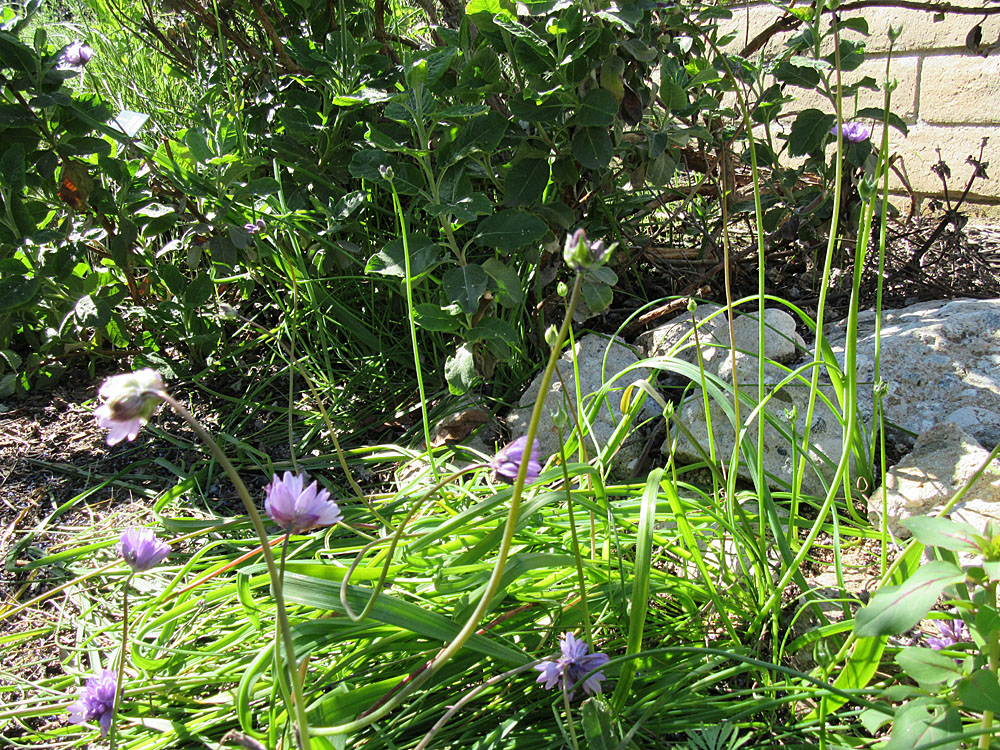 Mother Nature's Backyard - A Water-wise Garden