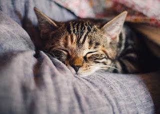 7 Cara Memelihara dan Merawat Kucing Piaraan Khusus Untuk Pemula