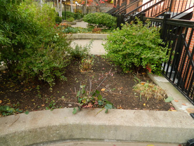 Garden District Toronto Fall Cleanup After by Paul Jung Gardening Services--a Toronto Organic Gardening Services Company