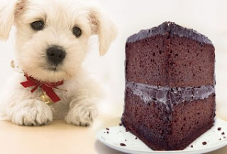 Dogs Eating Choclate - Why Choclate poisonous to Dogs