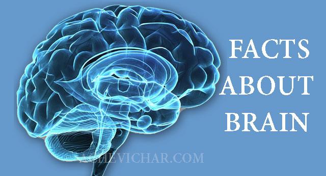 दिमाग के बारे में रोचक तथ्य | Facts About Brain In Hindi