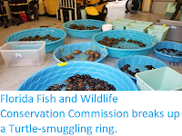 https://sciencythoughts.blogspot.com/2019/10/florida-fish-and-wildlife-conservation.html