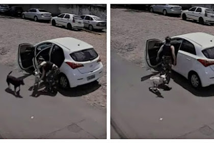Woman Dumps Disabled Dog Without Front Legs On Side Of Road And Speeds Off