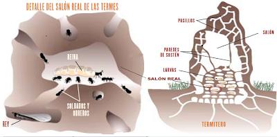 Hormigas y Termitas
