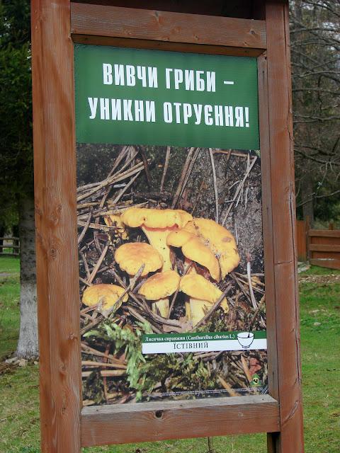 Стенды помогают изучить грибы