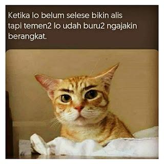 Kucing oren kelahi