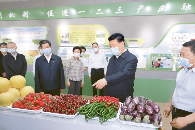 Xi Jinping aprende sobre o desenvolvimento da agricultura modernizada e a produção de produtos agrícolas especializados em um parque de ecoturismo rural no condado de Helan, Yinchuan, Região Autônoma Ningxia Hui, tarde de 9 de junho de 2020, durante uma visita a Ningxia de 8 a 10 de junho. [Foto do repórter Ju Peng da Xinhua]