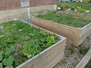 raised garden beds at Davis Thayer in June