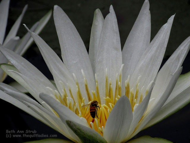Bee a Lily Photo