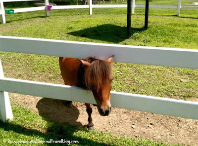 Land of the Little Horses in Gettysburg Pennsylvania