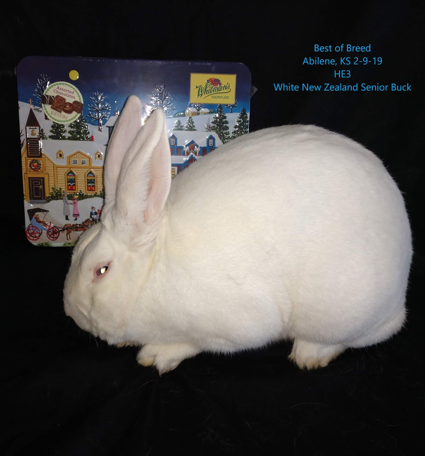 Burton Bunny Bowery Abilene Kansas Best Of Breed