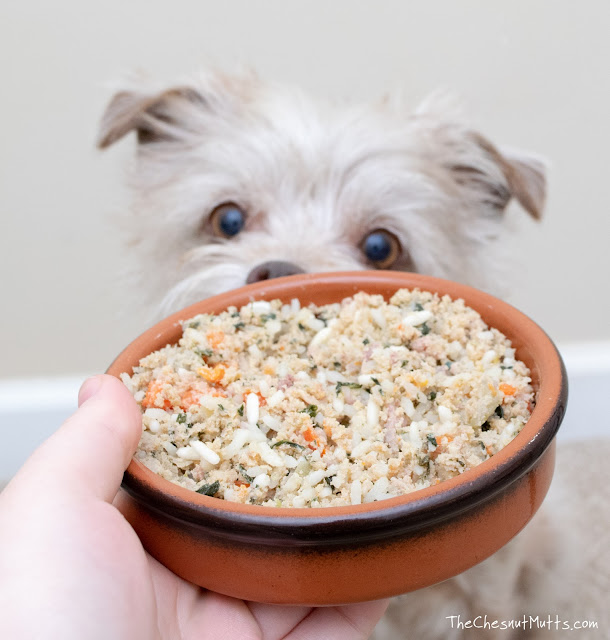 Dog looking at Just Food For Dogs chicken and rice human grade dog food