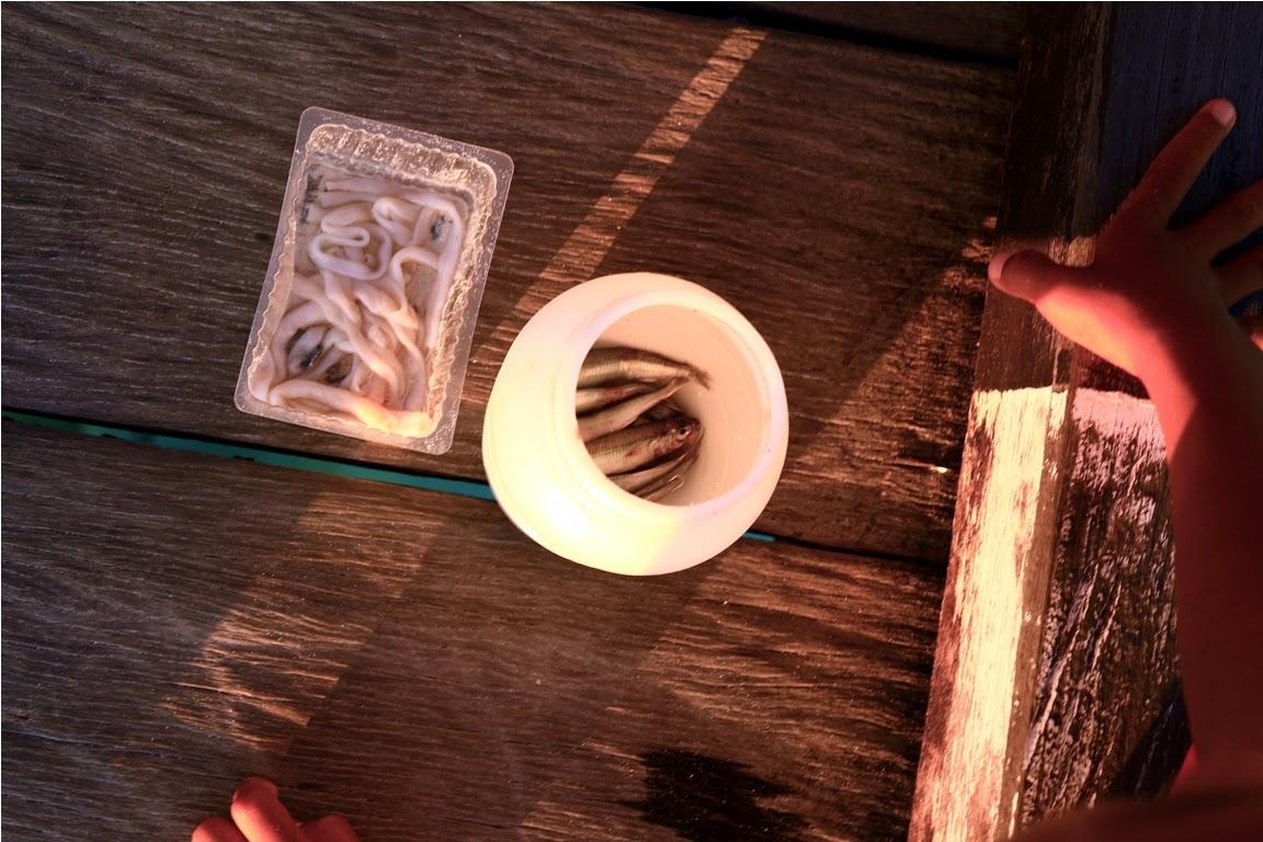 Umpan mancing yang mereka gunakan adalah ikan ramai dan cacing laut