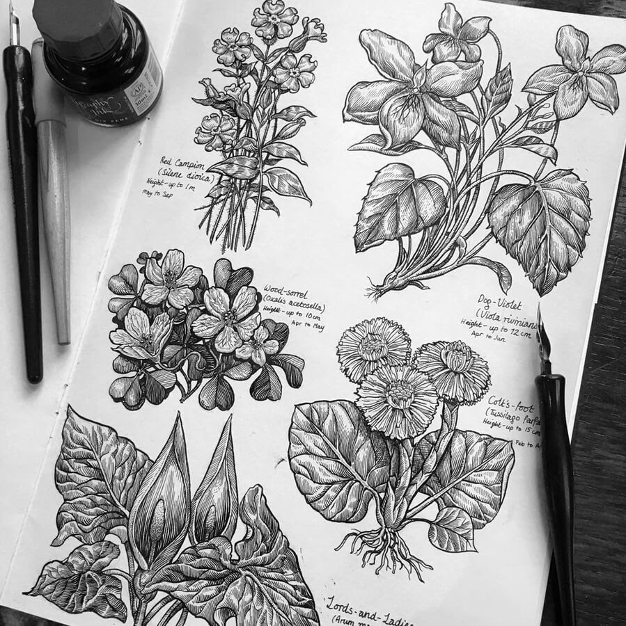 04-Flowers-and-plants-Philip-Harris-www-designstack-co