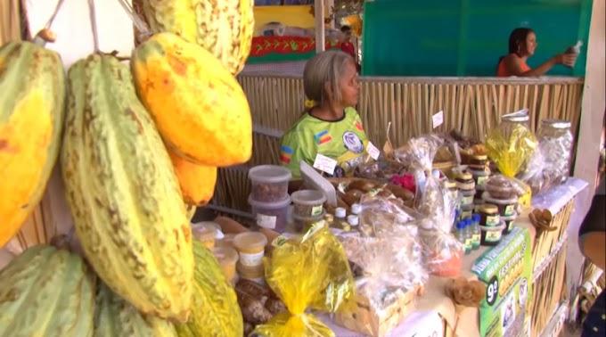 Em Itaituba: A Coordenação define detalhes sobre o XI Festival do Cacau