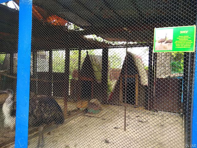 Птица Эму - Зоопарк в Луганске 2019