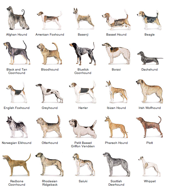 All types of dogs with pictures and information