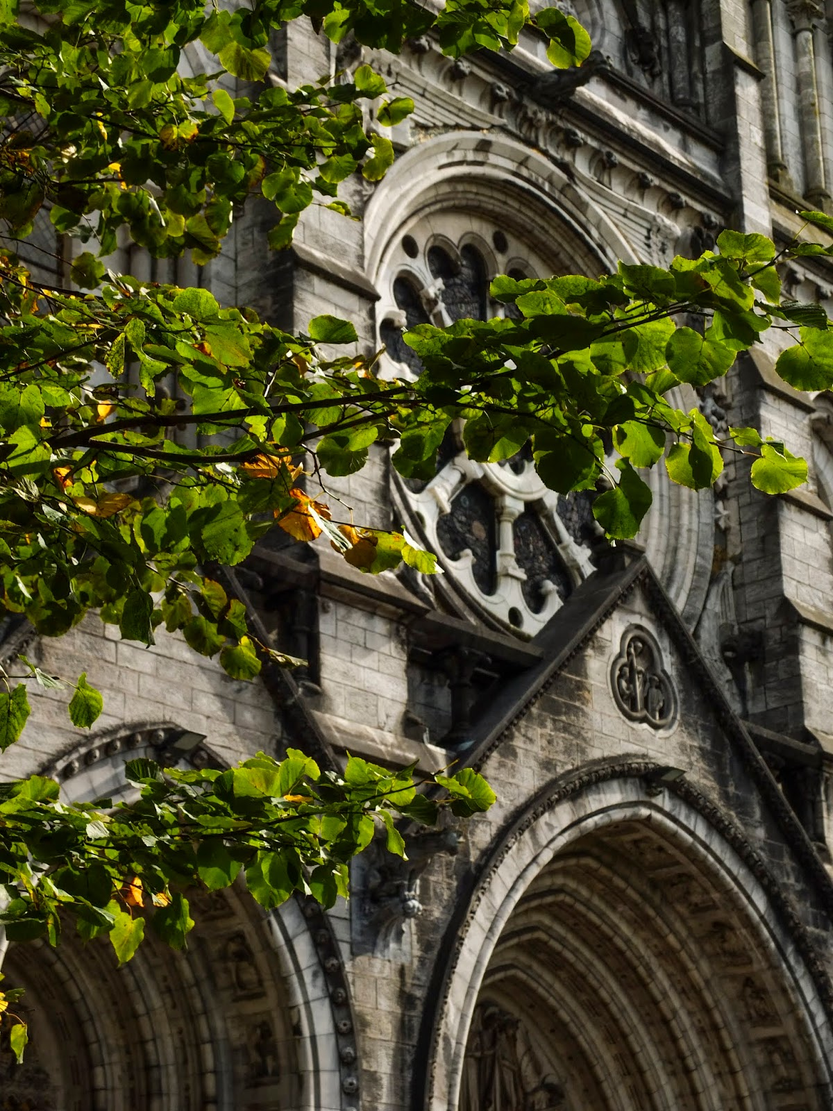 The rose window of the St Fin Barre's Cathedral behind sun lit tree leaves on branches.