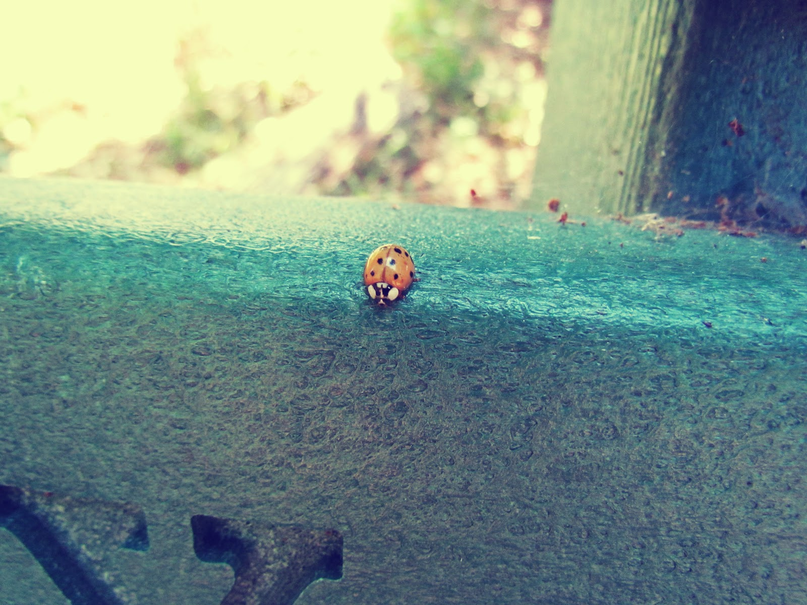 A lad bug crawling on a park bench in mother nature in Hammock Park, Florida