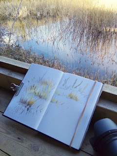 Nature journal page in progress