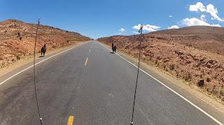 Lhamas na subida da serra de La Paz.