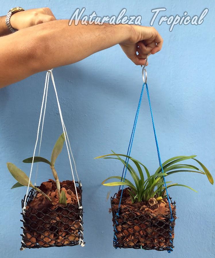 Crea las macetas perfectas para tus orquídeas con tus propias manos