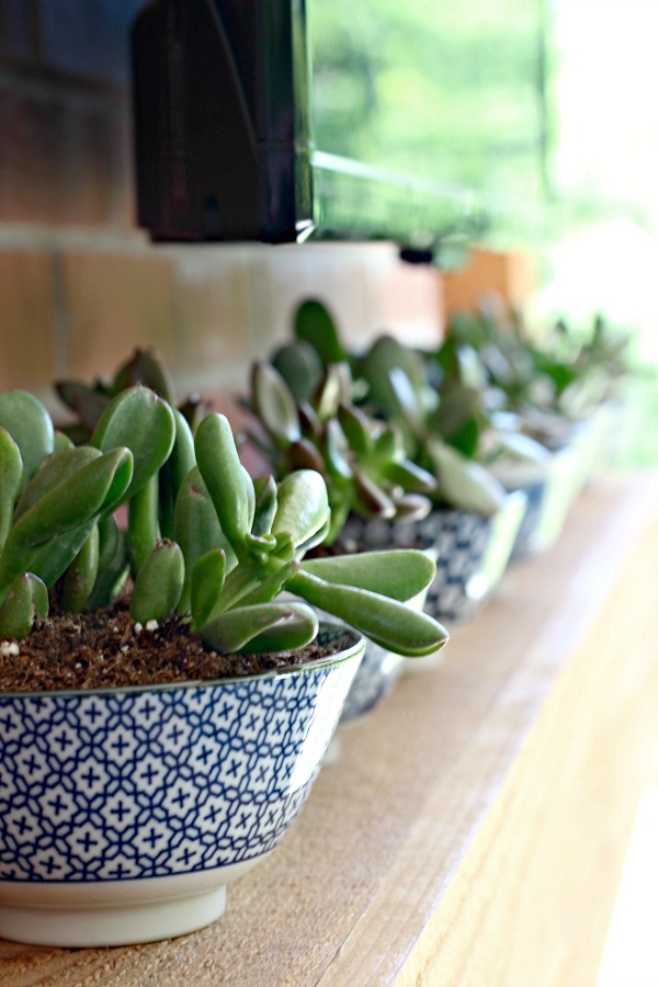 Mantel Decor for a Wall Mounted TV, mantel accessories, succulents, blue and white rice bowl