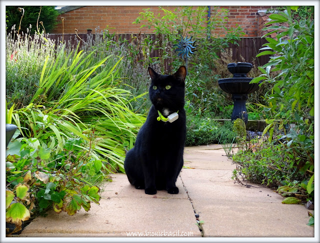 The Purrfect Panfur Pose by Parsley ©BionicBasil®The Sunday Selfies