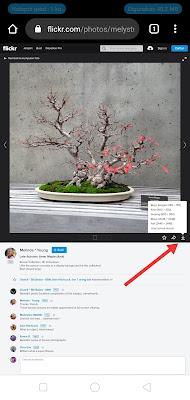Flickr Versi Desktop
