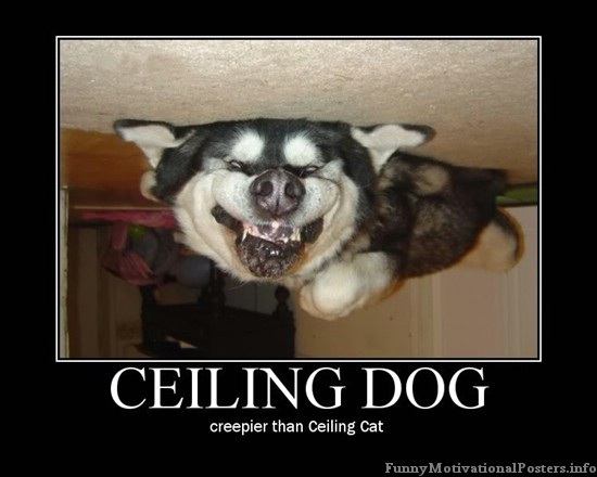 Picture Gallery: funny quotes dog pictures dog jokes cat