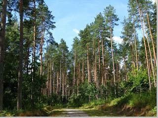 Contoh ekosistem daratan