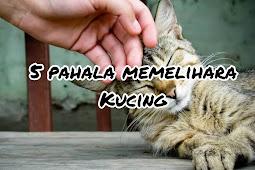 5 Pahala Memelihara Kucing yang Istimewa