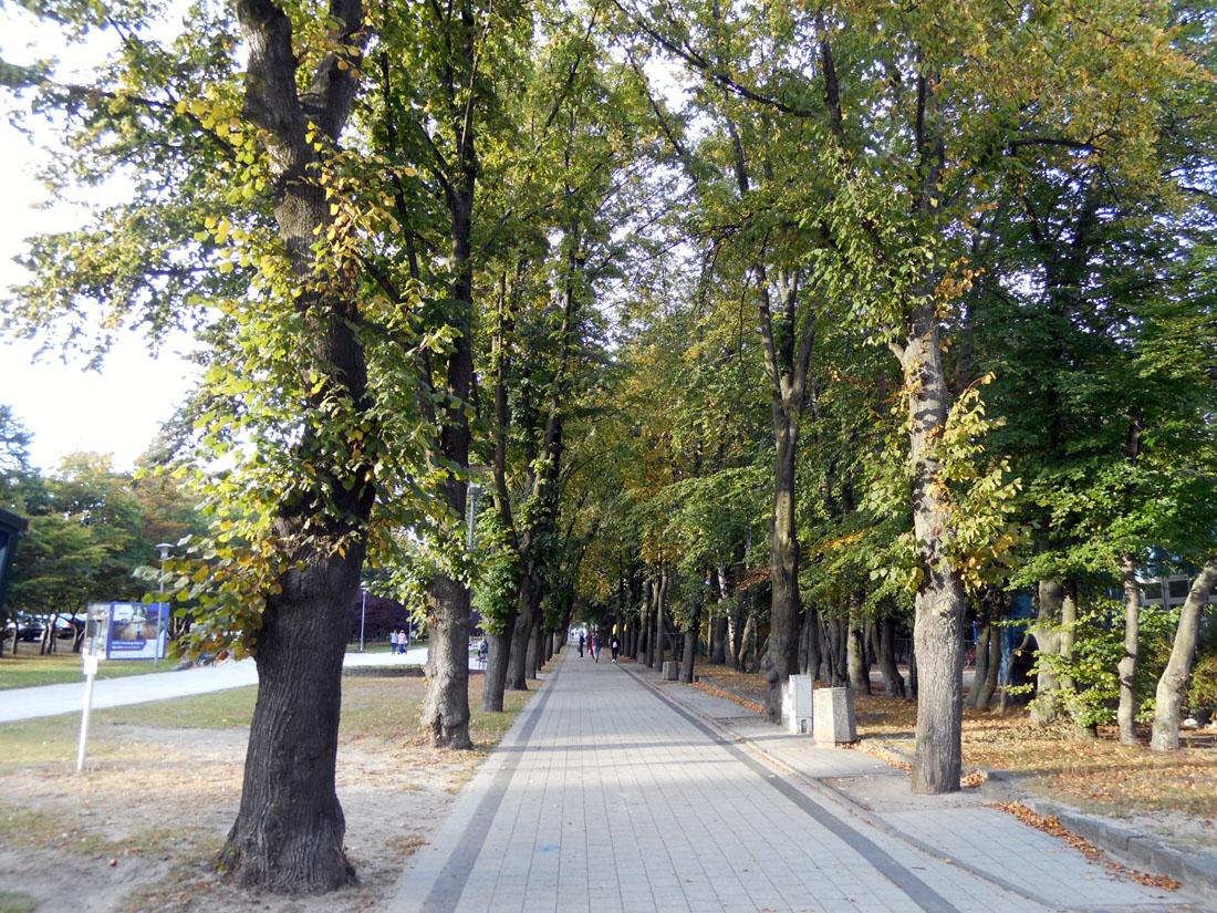 Viale alberato a Gdynia