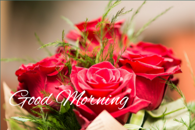 Good morning downloa rose images 2019