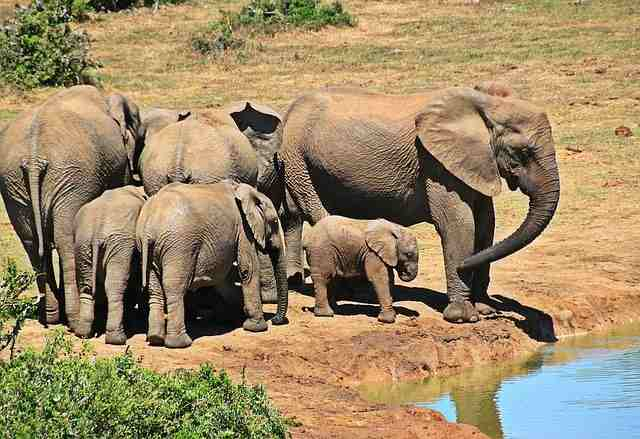 top 10 best places to explore in africa, kruger national park, kruger national park weather, weather for kruger national park, weather in kruger national park, kruger national park in south africa, kruger national park south africa, kruger national park map, map for kruger national park, africa map, africa, african, africa country, african countries, africa flag, african grey parrot, african elephant, africa song, africa twin, africa capital, african union, africa time, africa currency, african parrot, africa jungle,